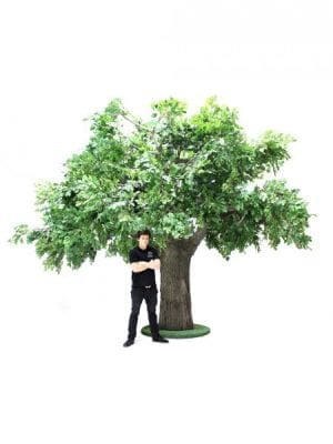 Trees, Plants & Foliage