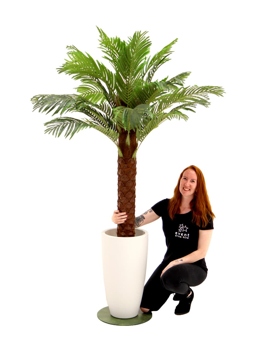 Medium Florida Palm in White Container